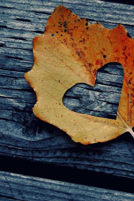 Rustic Fall Leaf Heart iPhone wallpaper   Autumn Iphone ...