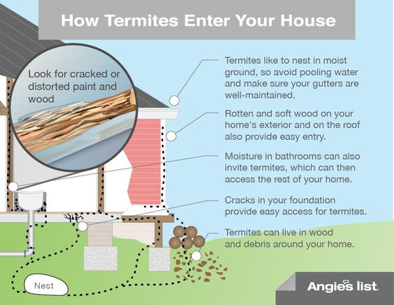 How termites enter your house | Work | Pinterest | It is ...