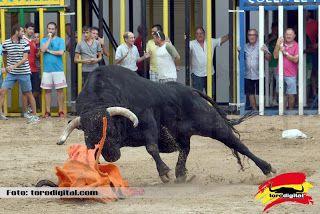 torodigital: La Vilavella vive de lleno sus fiestas patronales...