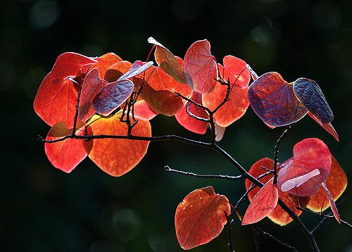 Colours for a wonderful sunday !! - Large On Black  Leaves / Blätter in Old Botanical Garden, Frankfurt