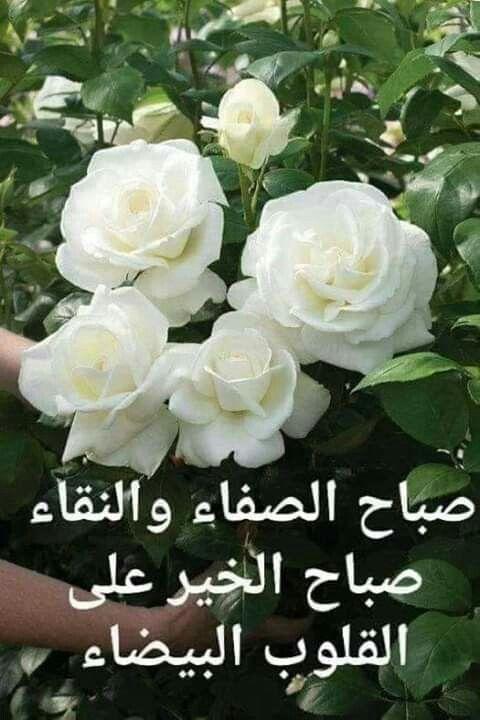 Pin By Basem Victor On صباح الخير Good Morning Images Flowers Good Morning Beautiful Images Good Morning Beautiful