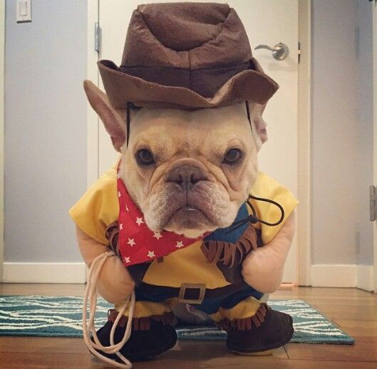 12 Costumes That Prove French Bulldogs Always Win At Halloween