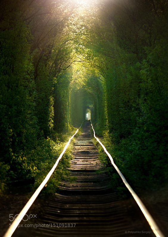 Tunnel of love by PolyushkoSergey. Please Like http://fb.me/go4photos and Follow @go4fotos Thank You. :-)