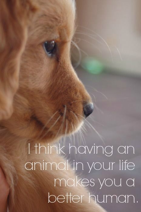 And an animal will become your best friend: