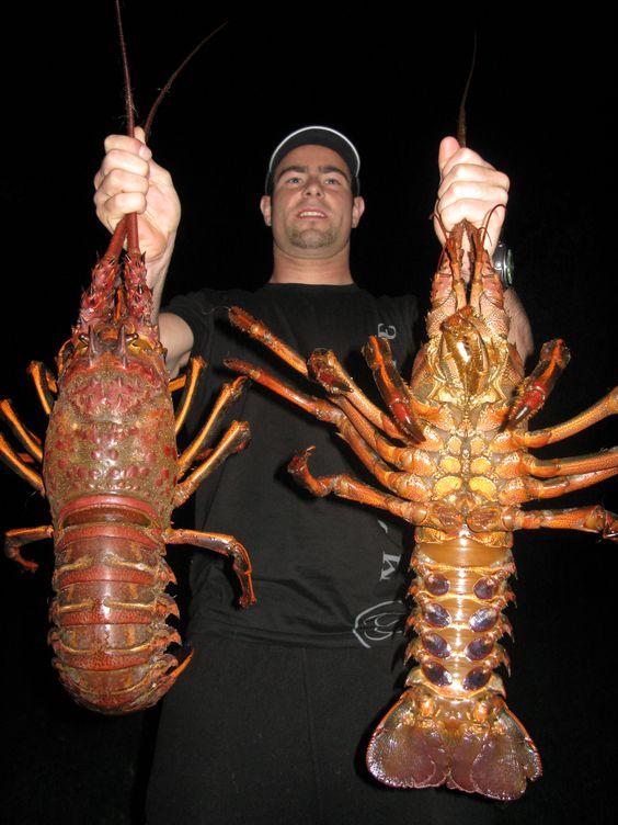 Pinterest the world s catalog of ideas for Lobster fishing california