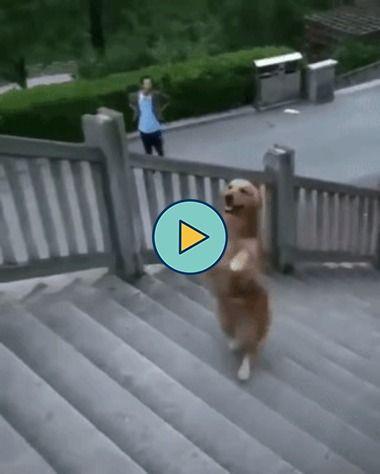 olha só esse cachorro, que lindo