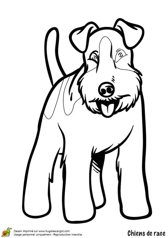 Coloriage chien fox terrier - Coloriage hugolescargot ...