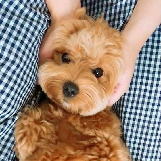 犬に愛される飼い主の3つの特徴 あなたはいくつ当てはまる いぬのきもちweb Magazine 犬 犬 靴 いぬ