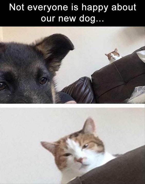 Funny Animal Pictures Of The Day – 20 Pics: