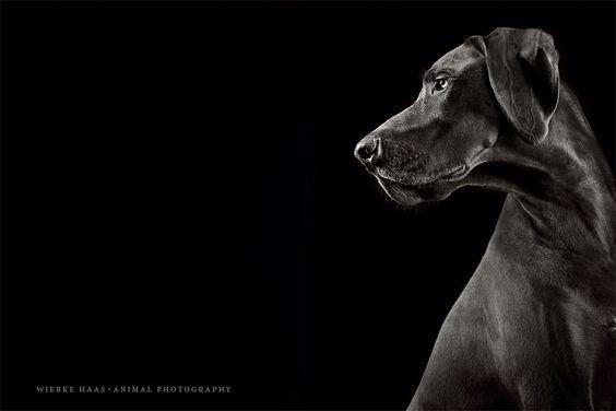 Wiebke Haas | animal photography » Bester Freund