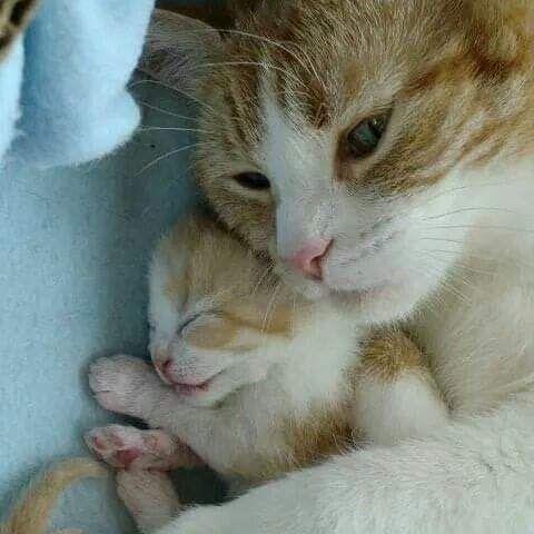 Pin On Cat Kitten