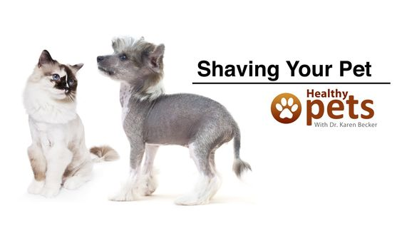 Dr. Becker: Should You Shave Your Pet?