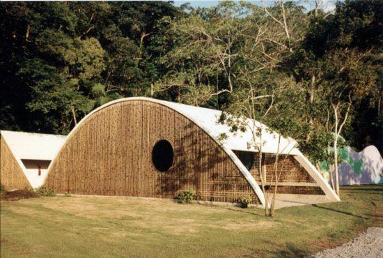 Bambu.