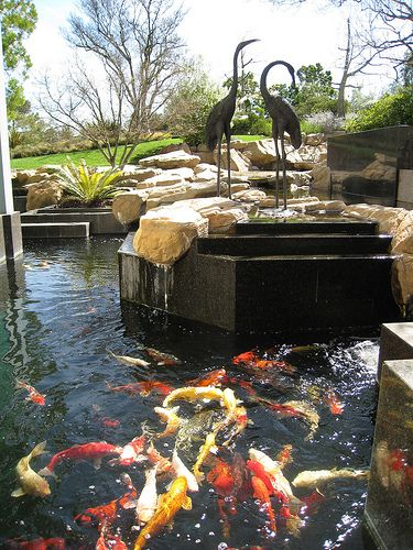 Would love to have a koi pond koi ponds pinterest for Outdoor goldfish for sale
