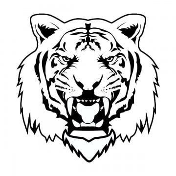 Vector Tiger Vector Tiger Animal Png Transparent Clipart Image And Psd File For Free Download Tiger Illustration Tiger Images Tiger Drawing