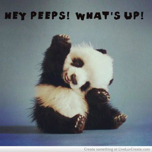Cute Animals Pictures With Quotes: Animal Sayings, Cute Animal Quotes And Search On Pinterest