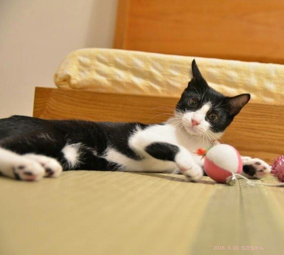 里親さんブログもかちゃんの幸せ通信 - http://iyaiya.jp/cat/archives/79795