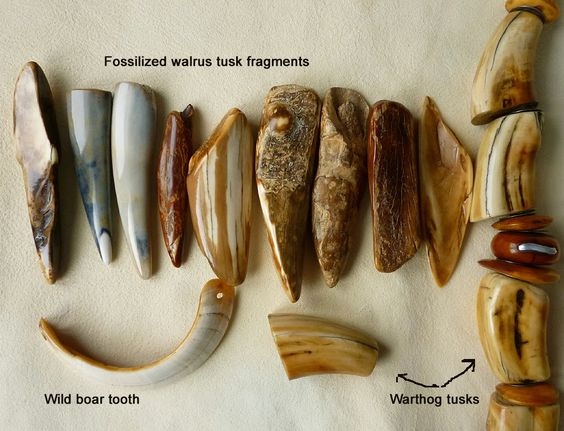 Warthog tusk vs Walrus tusk /and more ...( very interesting article !! to READ to learn more about the distinctive materials and ways to recognize them)
