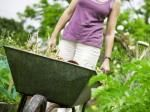 The First 3 Steps To Successful Gardening