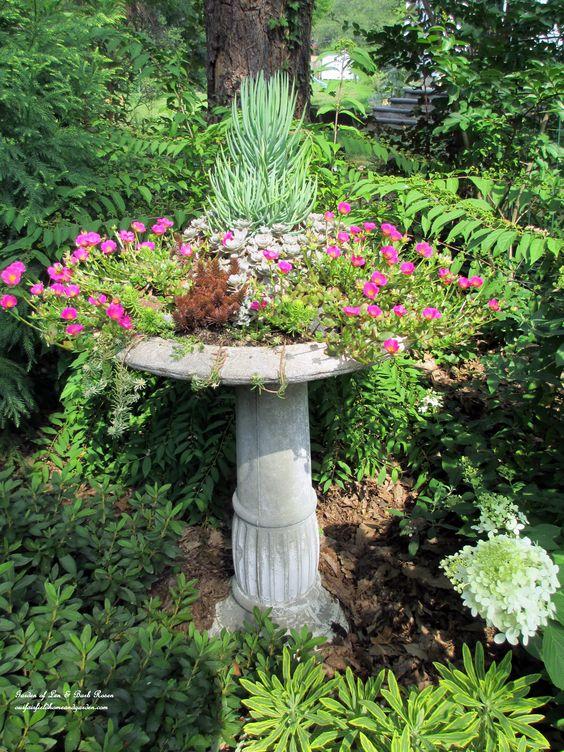 Purslane blooming in the succulent bird bath (Garden of Len & Barb Rosen)