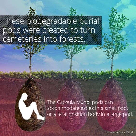 One Of These Green Options Is The Capsula Mundi Burial Pod Which - Capsula mundi burial pods