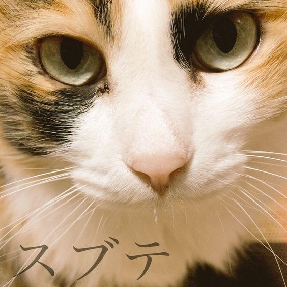 おはようございます寒い寒い朝でも良いお天気になりそう(広島) こちら何だかテンションの高いスブテ http://bit.ly/1OrF62D by @yyakAkayy