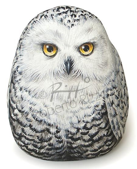 Snowy owl | Rock painting art by Roberto Rizzo