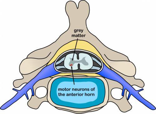 Motor neurone disease: Researchers identify new group of gene suspects 3/16/15 MedicalXpress  www.BrainHealth.Rocks