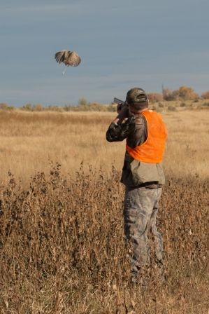 ... hunting 1816 upland bird hunting and more hunting birds colorado