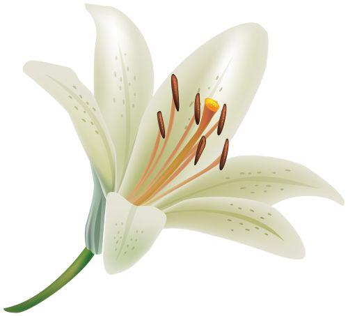 Lily y karina blanco