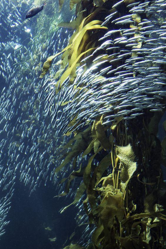 Twist #montereybayaquarium http://www.montereybayaquarium.org/visit