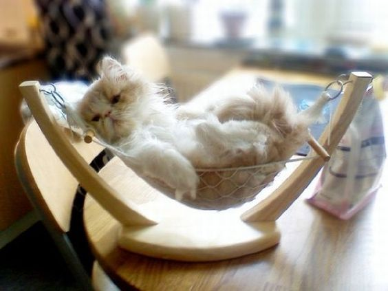 banana hammock is now kitty hammock