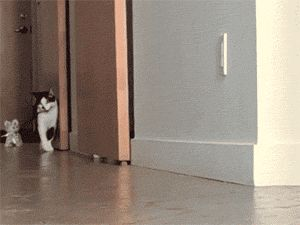 The 118 Funniest Cat GIFs Ever http://www.resharelist.com/funny-cat-gifs/