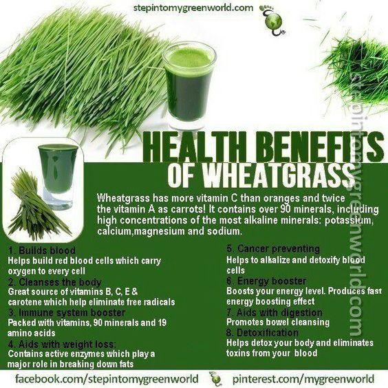 Health Benefits of Wheatgrass.