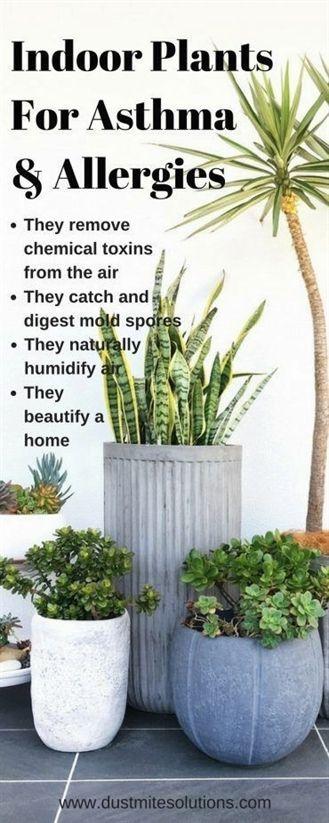 best indoor plants for asthma allergies and air pollutions #indoor garden