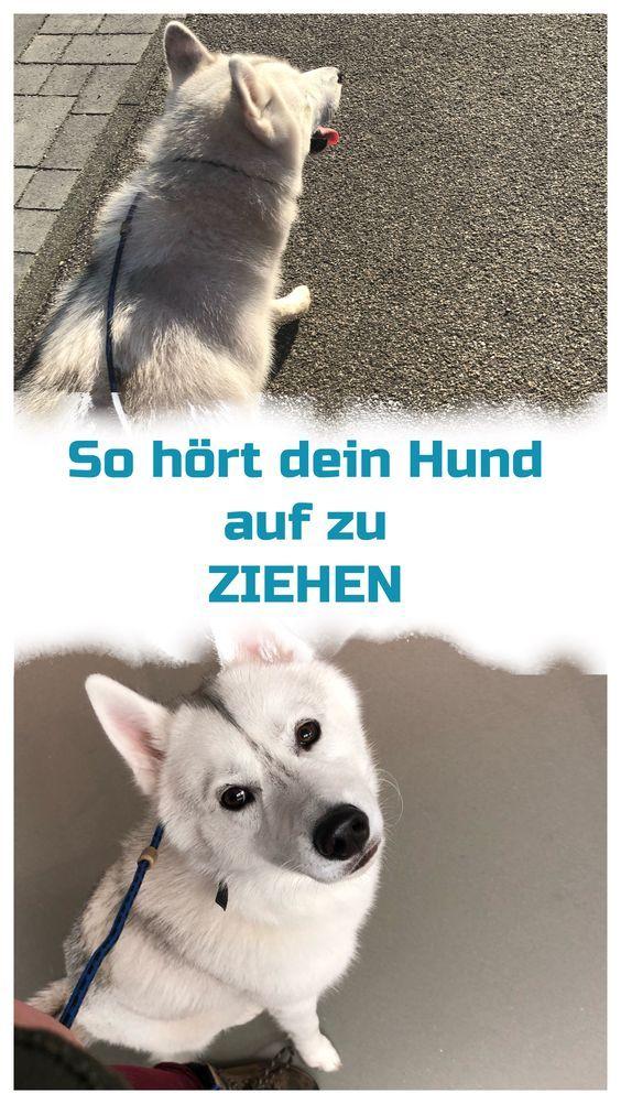 Pin Von Giesske Susanne Auf Hund In 2020 Hundchen Training