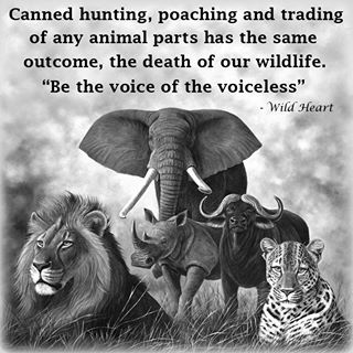 Canned hunting, poaching and trading of any animals parts has the same outcome, the death of our wildlife. Be the voice for the voiceless.: