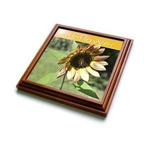 Peach Sunflower Macro- Flowers- Photography