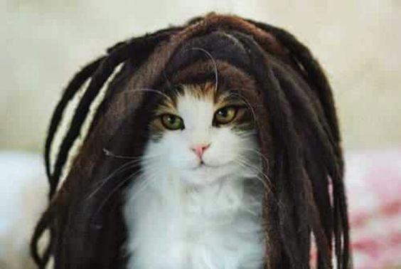 Bob Marlys ~  CAT!   :))