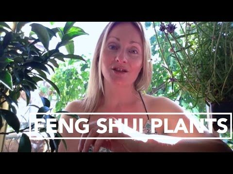 Learn to easily create good feng shui energy in your home or office with various plants. The info on feng shui color decorating (mentioned in the video) is h...
