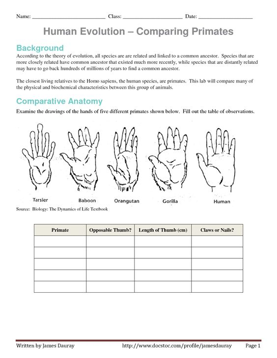 Pictures Evidence Of Evolution Worksheet - Getadating