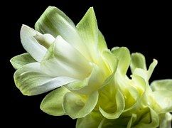 Flor, Branco, Verde, Fechar, Pétalas