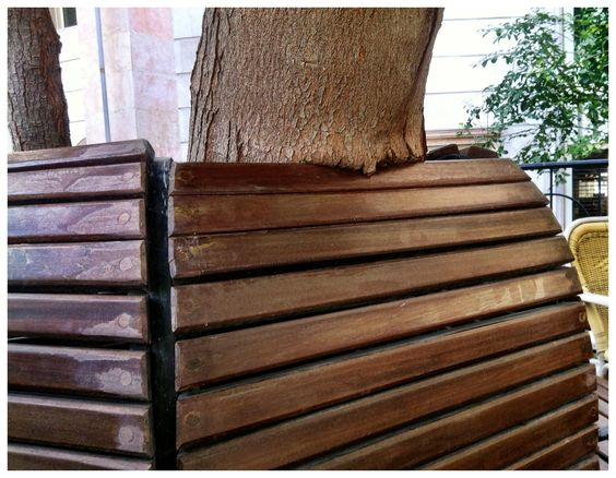 Leaning tree | Dubai