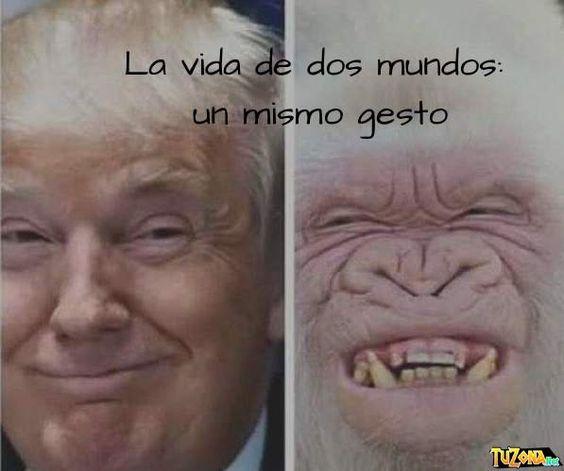 Hombre mono: