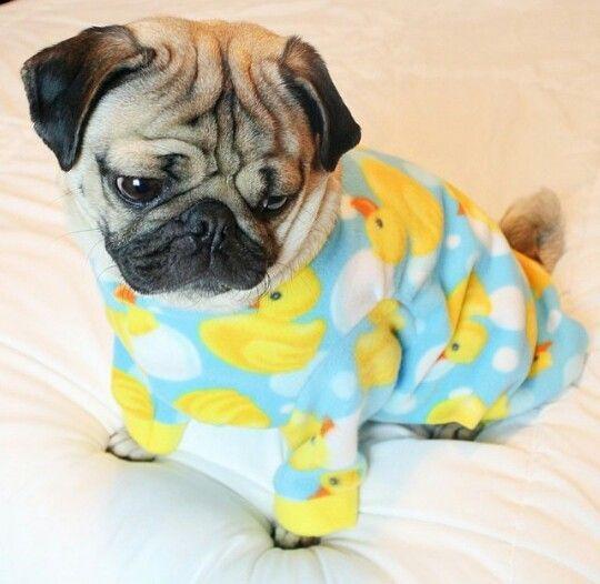 Love These Ducky Pajamas Pug Baby Pugs Cute Pugs Pugs Funny