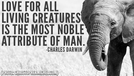 """Love for all living creatures is the most noble attribute of man."":"