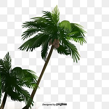 Cartoon Green Coconut Tree Cartoon Fruit Tree Tree Png Transparent Clipart Image And Psd File For Free Download Green Christmas Tree Decorations Tree Photoshop Watercolor Trees