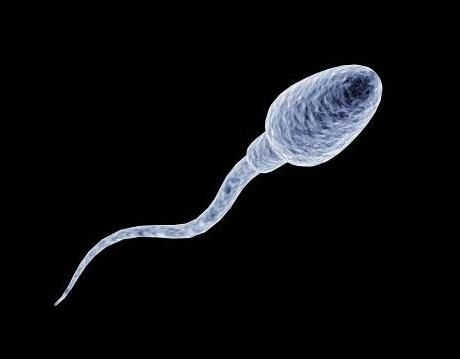 Your First Photo A sperm swimming