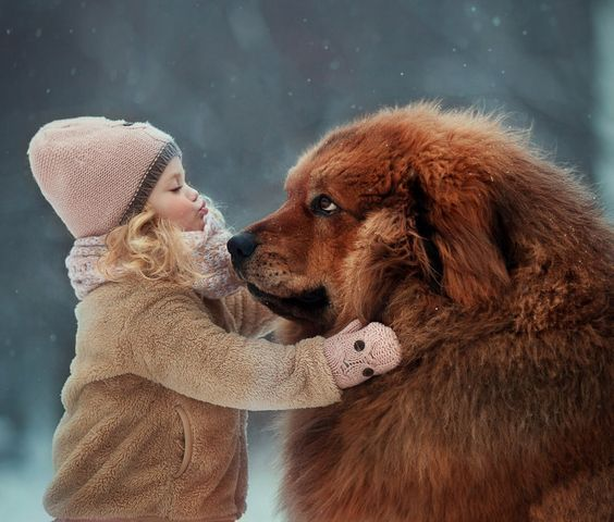 30 Big Dogs Livin Large With Awesome Names Pictures Dogtime Big Dogs Animals Funny Cats And Dogs