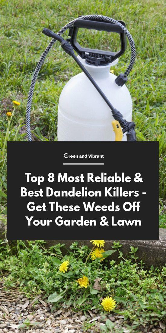 9987b92e5cf8264fea948b84c697d76a - The Best Weed Killer For Gardens